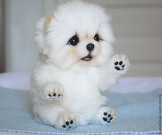 puppies and babies together - puppies and babies ; puppies and babies videos ; puppies and babies together ; puppies and babies pictures ; puppies and babies videos together ; puppies and babies quotes Cute White Puppies, Cute Baby Dogs, Baby Animals Super Cute, Cute Little Puppies, Cute Little Animals, Cute Dogs And Puppies, Cute Funny Animals, Cute Cats, Baby Pugs