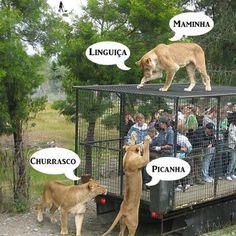 Imagens com mensagens inteligentes e divertidas para postar no FACEBOOK - Porquinho doido | imagens engraçadas | frases para Facebook
