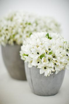 Try bouvardia: http://www.stylemepretty.com/2015/04/16/get-the-look-wedding-flower-alternatives/
