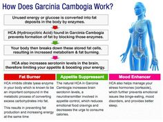 HCA in garcinia cambogia is the ingredient that helps you lose weight. If you are looking to purchase a garcinia cambogia supplement make sure you look at the amount of HCA it has! Dr Oz Weight Loss, Best Weight Loss Pills, Weight Loss Meal Plan, Lose Weight, Increase Serotonin, Serotonin Levels, Garcinia Cambogia Diet, Coffee Works, Green Coffee Extract