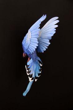 Realistic Bird Paper Sculptures by Diana Beltran Herrera