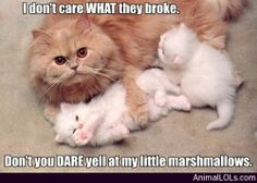 Don't Yell at My Kids… Or Else - http://www.animallols.com/cats/dont-yell-at-my-kids-or-else/