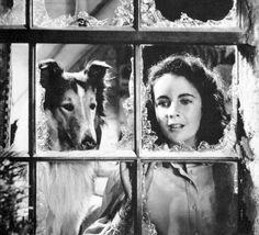 Elizabeth Taylor in Courage of Lassie
