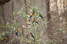 Merchison falls, Uganda. #Uganda #birds #bird #birdlovers #nature #birdwachers