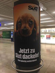 """""""Jetzt zu Sixt dackeln!"""" (Sujet 2)  Drei Sujets waren an je einer Plakatwand am Frankfurter Flughafen angebracht. Werbung von der Autovermietung Sixt ist einfach immer ein Hingucker! #poster #plakat #hund #dackel #werbung"""