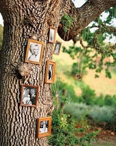 Family Tree- oak tree decorated with old pictures of the couple's families.