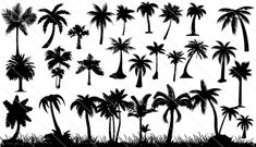 Palm Tree Silhouette Vector (30 Palm Trees) #palm #silhouettes #vector