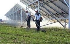 Grass Cutting is fundamental to ensure a safe phtovoltaic system