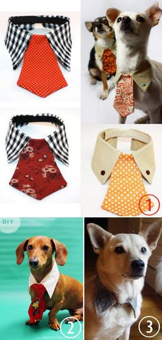 DIY or Buy: Dog Tie and Collar. For more pet DIY gift ideas go here: truebluemeandyou.tumblr.com/tagged/pets • Collage and Doggie Couture from the Etsy Store of JalinaColon here. • DIY Cheap and Easy...