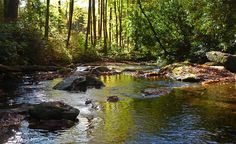 """The Pisgah Forest and the Davidson River that runs through it offer wonderful recreation and relaxationopportunites in Brevard, North Carolina, just a few minutes from the heart of town."" (From: 35 Most Travel-Inspiring Nature Photos)"