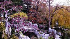 The Secret Garden, Chinese garden of friendship