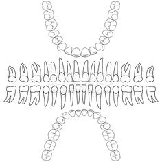 dental formula, the template vector teeth for dental clinic website