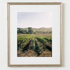 #Grapevine #Vineyard #Art #Minimal #Frame #Spring #Style #Fashion #BiographyInspiration