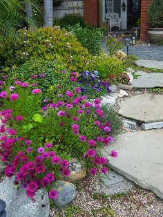 xeriscape - beautiful! Very colorful plants, no cactus and plant list included.
