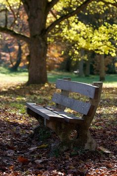 Autumn Bench - getting close to the first day of autumn, so I am getting a head start. Love park benches in the autumn, alone or with someone special