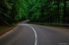 جاده جنگلی عباس آباد