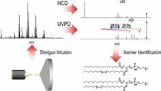 #AChem: Structural Characterization of Phosphatidylcholines Using 193 nm Ultraviolet Photodissociation Mass Spectrometry #MassSpec