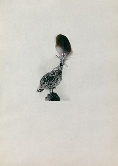 PETRIT HALILAJ  Several birds fly away when they understand it 2013   Risograph printing and drawing on paper