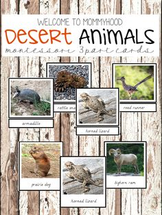 You can use these Desert animals 3 part cards to create beautiful Montessori activities. They are perfect for Montessori language activities. Animal Activities, Montessori Activities, Language Activities, Animal Themes, Montessori Education, Montessori Materials, Desert Biome, Desert Animals, Wild Animals