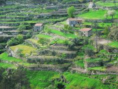 terras de cultivo ,Bouça