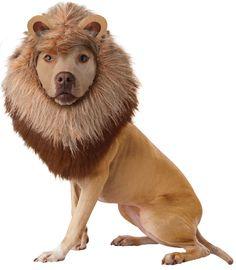 Lion Pet Costume