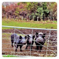 Farm life in New Zealand