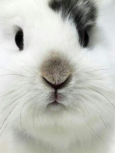bunny close up!