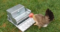 10 best DIY chicken feeder and waterer plans and ideas | The Poultry Guide