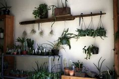 wall of plants