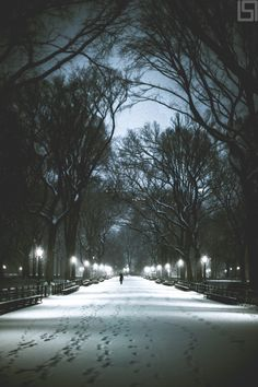 The Mall at Central Park by Paul Seibert Photography - New York City Feelings York Things To Do, A New York Minute, Nyc Christmas, New York Winter, Visiting Nyc, Manhattan Nyc, New York City Travel, New York Photos, Dream City