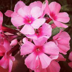 Pretty in pink #fairytalesimagery #garden #florals