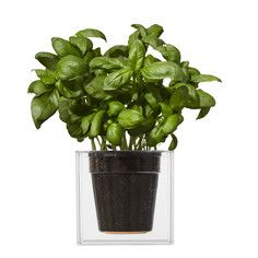 From Boskke, an innovative self-watering large cube clear planter. Features SloFlo watering technology that allows you to fill the reservoir and your plant to stay healthy for extended periods. Features plastic cube construction and ceramic plant base. Plastic Planters, Large Planters, Flower Planters, Flower Pots, Modern Planters, Hanging Planters, Water Flowers, Water Plants, Potted Plants