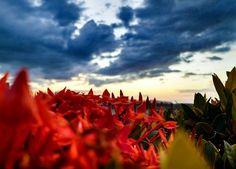 É capaz de ouvir as vozes da montanha e com as cores do vento colorir?  Pocahontas  #colorsofthewind #sunset #pordosol #dusk #sun #lights #colors #sol #nature #natureza #flowers #flores #vermelho #red #ceu #sky #nuvens #clouds #plants #night #crepusculo #luscofusco #horizon #horizonte #blue #santarem #pará #brasil
