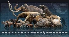Megafauna de México a finales del Pleustoceno (Mexican Megafauna at the end of the Pleistocene)