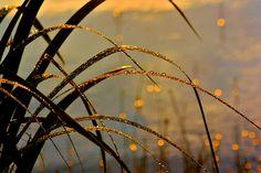 After the rain sun's rays gild the field Sotkuma, Finland / Terttu Sormunen / yle.