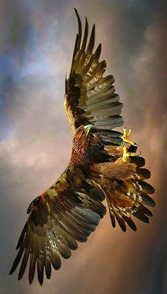 The golden Eagle is also a very good looking Eagle, just like the Bald Eagle! Eagle Images, Eagle Pictures, Beautiful Birds, Animals Beautiful, Aigle Animal, Eagle Wallpaper, Hawk Bird, Eagle Art, Majestic Animals