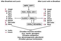 Biology, Metabolism, Diabetes, Meals, Healthy, Meal, Health, Yemek, Ap Biology