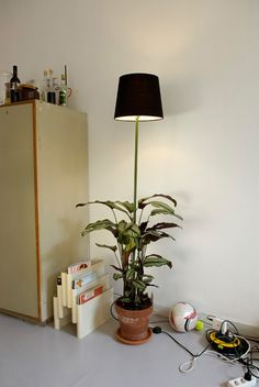Plant lamps by designer Helmut Smits. What more can I say? http://www.cmybacon.com/2010/07/plant-lamps/