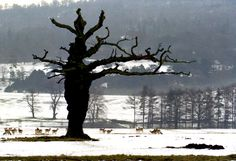 Winter at Chatsworth House - Derbyshire - England