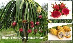 gardening tips dragon fruit tree help, gardening, how to, landscape