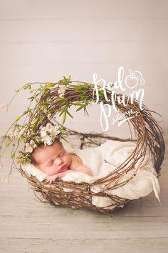 Newborn photography – Home & Women Newborn Photography Props, Newborn Photo Props, Newborn Photographer, Nature Photography, Photography Flowers, Newborn Pictures, Baby Pictures, Newborn Pics, Newborn Care