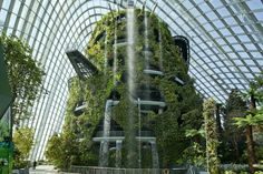 Cooled Conservatories At Gardens By The Bay - Picture gallery
