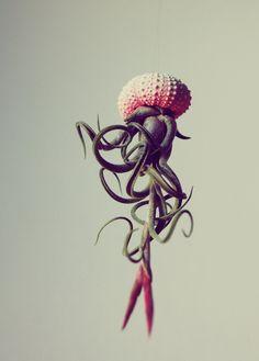 plantes-aeriennes-meduses-pot-oursin-petitbeast-0
