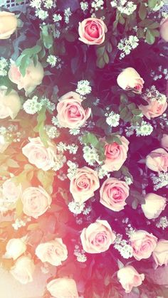Shared by Daisy BM. Find images and videos about flowers, wallpaper and rose on We Heart It - the app to get lost in what you love. Tumblr Wallpaper, Tumblr Backgrounds, Cute Backgrounds, Flower Wallpaper, Cool Wallpaper, Cute Wallpapers, Wallpaper Backgrounds, Floral Wallpapers, Nature Wallpaper