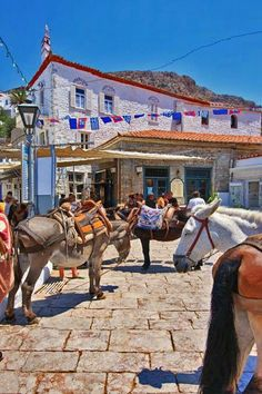 The Mules of Hydra Island, Greece