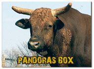 Bucking Bulls, Bull Riding, Athletes, Animals, Animales, Animaux, Animal, Animais