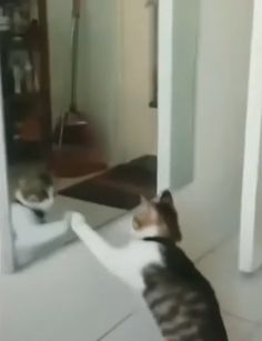 Le chat qui veut apprendre à danser ensemble …………. The cat who wants to learn to dance together …………. Funny Cute Cats, Silly Cats, Cute Cats And Kittens, Cute Funny Animals, Cute Baby Animals, Crazy Cats, Funny Chat, Funny Animal Memes, Funny Cat Videos