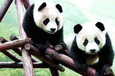 #TaichiSpecial: Name a Taichi Master! (Part 2) Remember Po? The #KungFuPanda?…