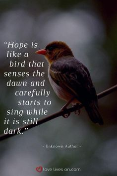 This quote reminds us of the importance of having hope in our time of grief as we remember our special … Bird Quotes, Nature Quotes, Quotes About Birds, Remembering Dad Quotes, Dawn Quotes, Gif Fete, Citation Nature, Great Quotes, Inspirational Quotes