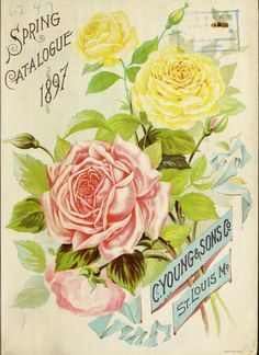 Front cover of C. Young & Sons Co 'Spring Catalogue 1897' with an illustration of pink and yellow roses. C. Young & Sons Co. St. Louis, Mo. U.S. Department of Agriculture, National Agricultural...